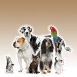 animali-domestici-che-si-levano-piedi-davanti-alla-priorit-bassa-marrone-11785248